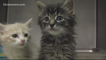 Kitties 'Cardi B,' 'Post Malone' looking for a new family