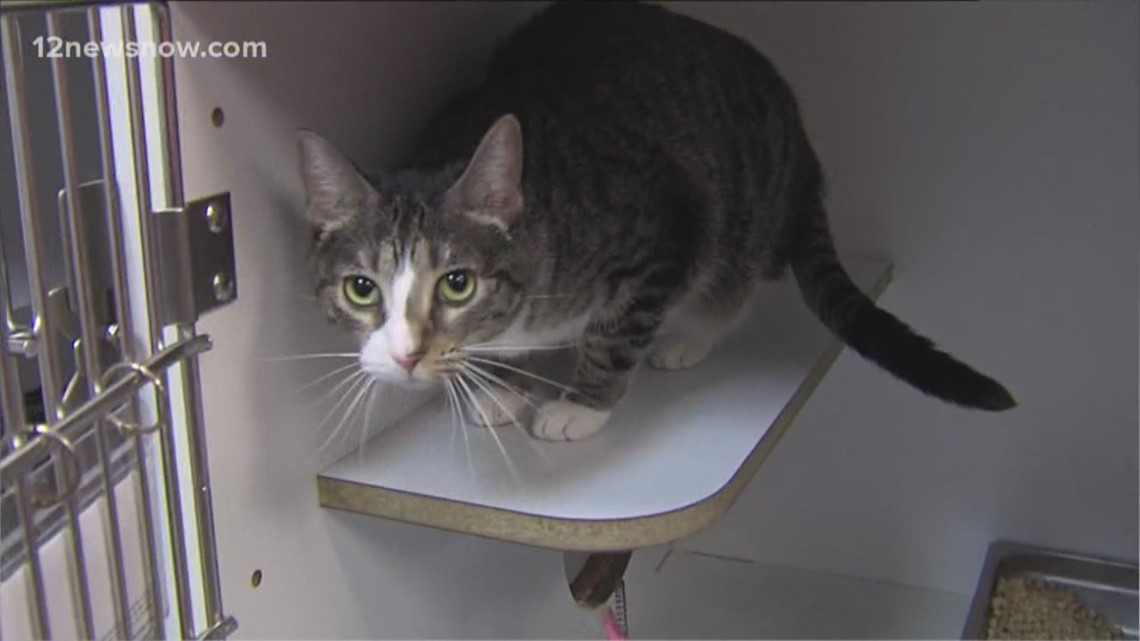 'Sugar,' the kitty wants to join your family