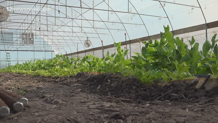 Southeast Texas farmers lose crops in winter storm aftermath
