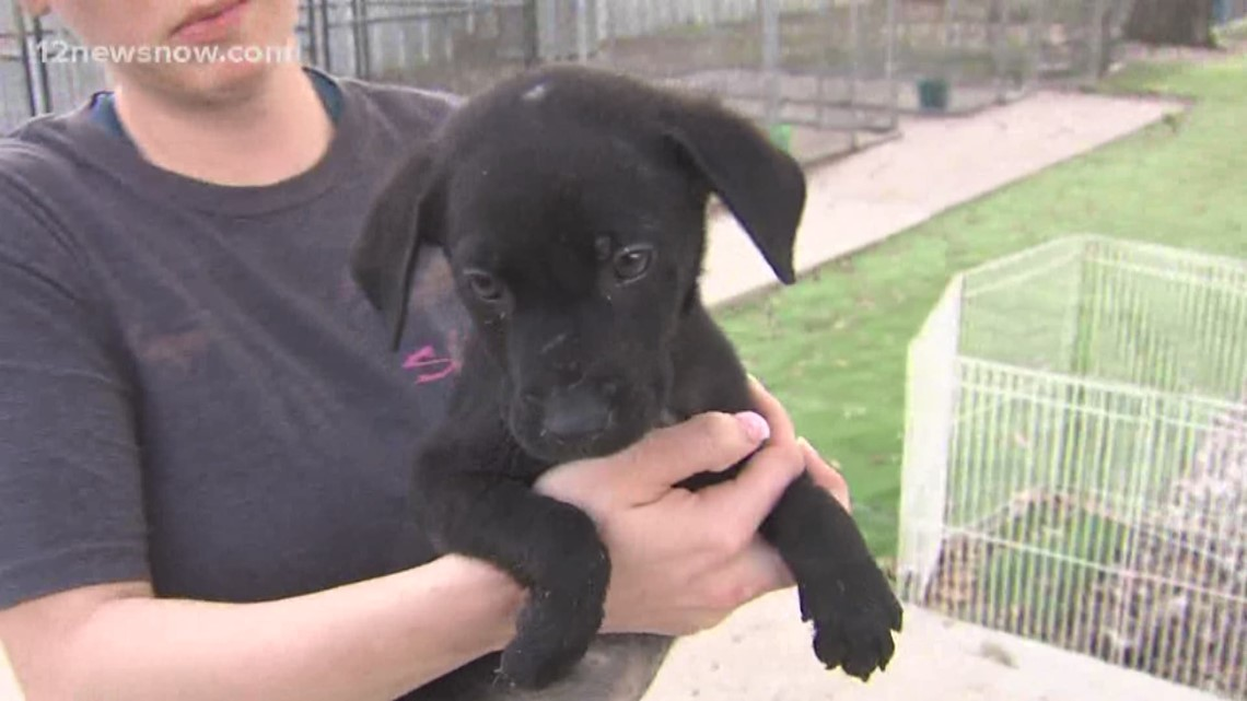'Prince Charming' the pup wants to join your family
