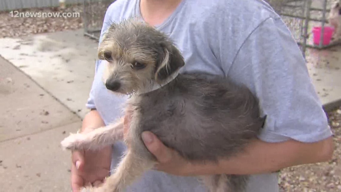 'Scruffina,' the pup needs a loving home