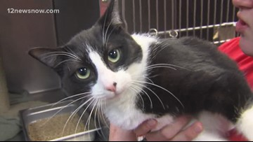 Storm the kitty cat wants to be your best friend