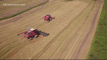 Southeast Texas rice farmers finishing up 2018 rice harvest