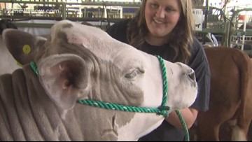 Students work hard for successful Junior Livestock Auction