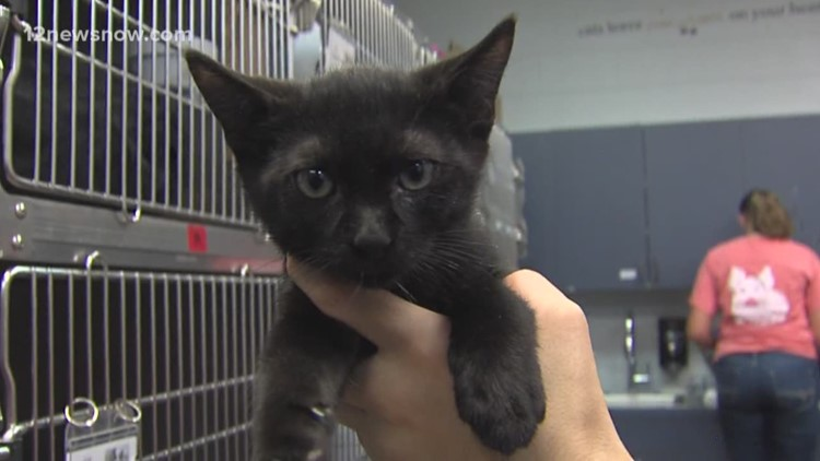 'Swiss Roll,' the kitty is looking for a family to call his own
