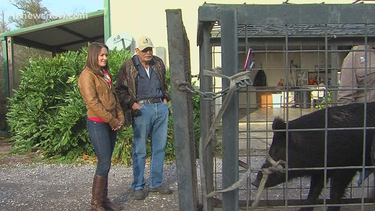 Free feral hog trapping permits available at Big Thicket