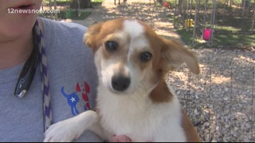 'Morsel,' the pup needs a forever family