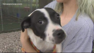'Presley,' four month old pup needs a forever family