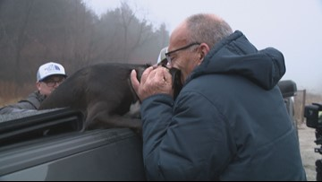 'You made my week, my year, my life'   Dog who ran from deadly Missouri crash reunites with owner