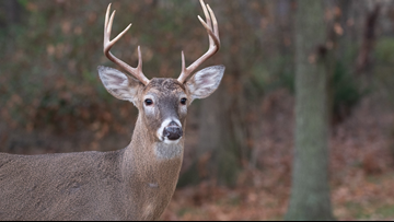 Arkansas hunter dies after being attacked by deer he shot