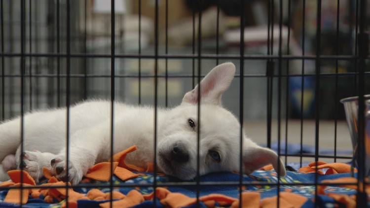 Colorado foster homes needed for 100+ dogs rescued from Texas cold