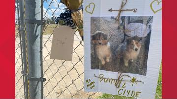 'Extremely heart wrenching' | 75 dogs killed in fire at Ponderosa Pet Resort in Texas