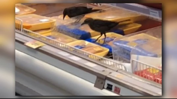 Grackles spotted pecking at meat in Austin H-E-B
