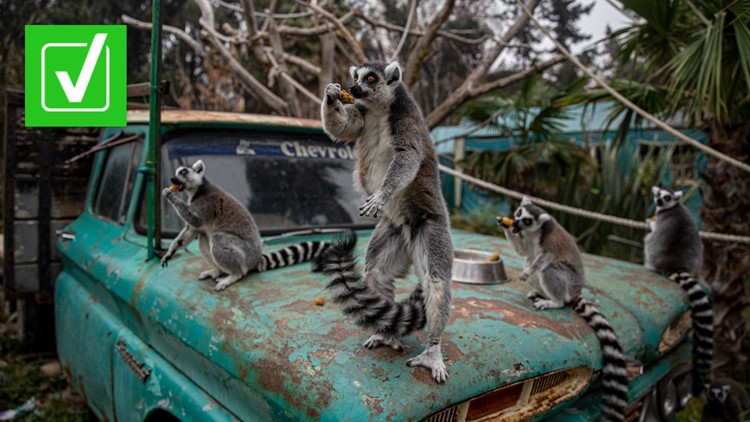 Yes, a man is facing federal charges for stealing a lemur from a zoo