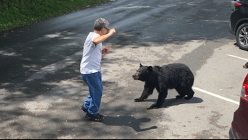 WATCH: A Tennessee visitor confronted a momma bear and her cubs, so she charged