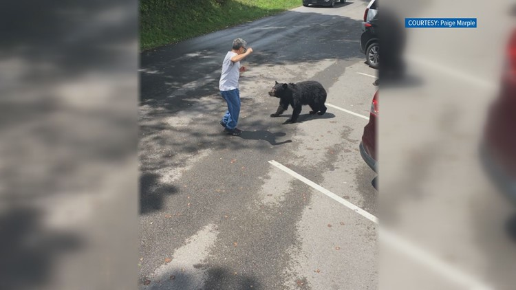 Tennessee momma bear won't be punished for lunging at man that got too close, but neither will he