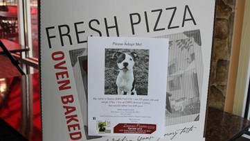 This Charlotte pizza shop is putting photos of adoptable dogs on their pizza boxes