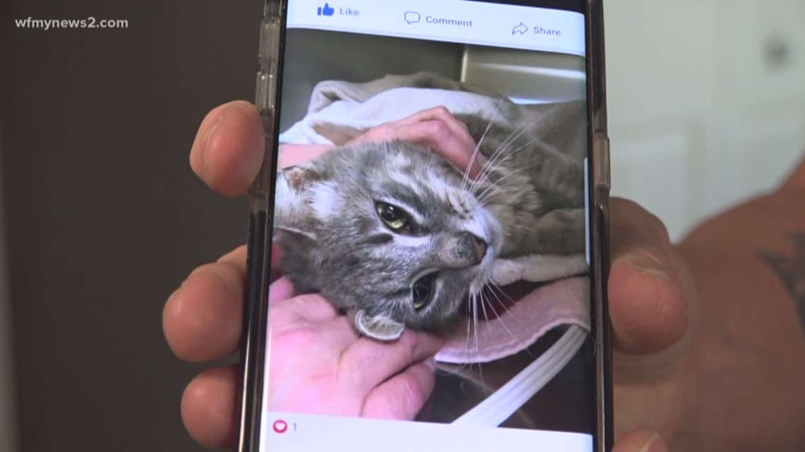 Asheboro Woman Finds Cat That Was Intentionally Set On Fire