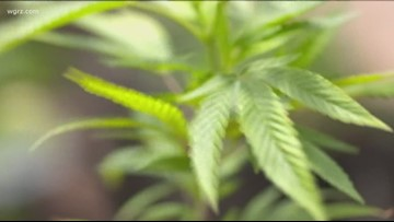 Buffalo Mayor orders police to stop enforcing low-level marijuana possession offenses