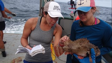 USF researchers tested 2,500 fish 10 years after Deepwater Horizon. There was oil in all of them