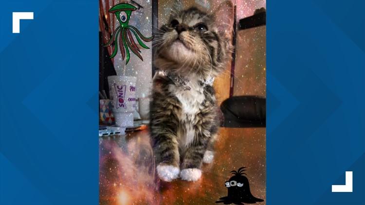 area 51 cat 7 20 19