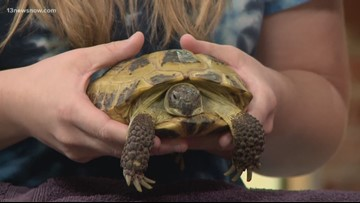 Shelter Sunday: Want to adopt a tortoise? 'Natasha Romanoff' may be the one for you.