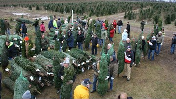 Michigan farm donates 465 Christmas trees to military families