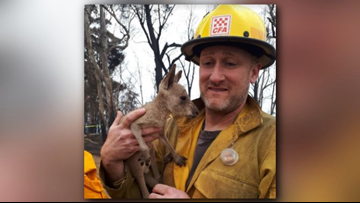 Michigan firefighter battling Australian wildfires photographed with kangaroo joey