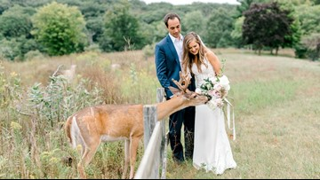 Deer leans into Michigan wedding photo, eats bouquet